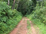 3 Acres 88 Perches Scenic Land for Sale at Ruwanwella