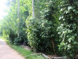 5 Acre Agriculture Land for Sale at Gurudeniya, Kandy.