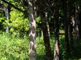 10 Perches of Valuable Agar wood Land for Sale in Deraniyagala.