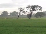 7 Acres Land for Sale at Wasgamuwa, Highly wild life attracted place.
