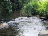2 Acres VP Tea Land for Sale at Galaha, Kandy broadening to water stream.