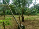 85 Perches Land for sale in Ruggahawila, Nittambuwa.